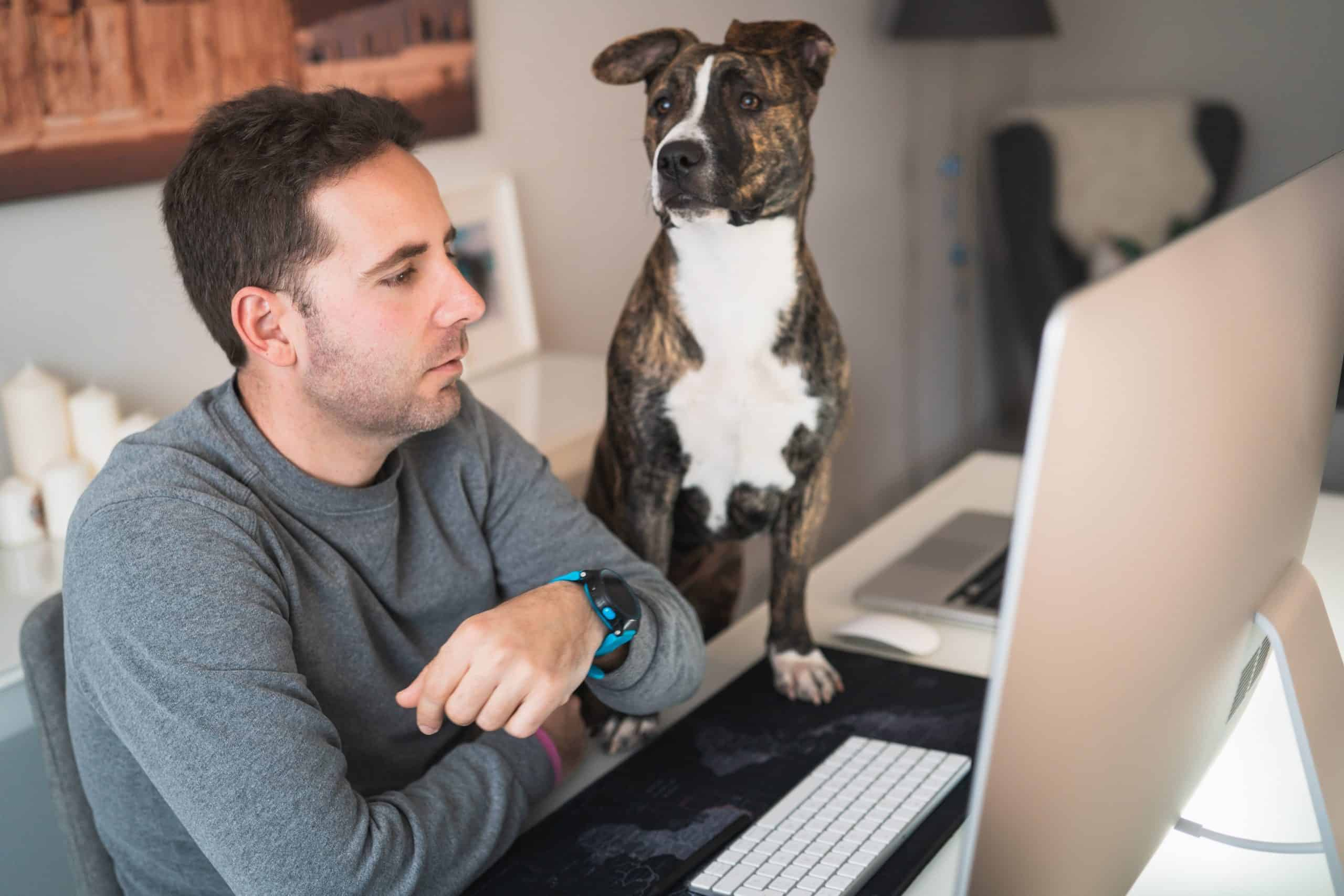 Dog watches while his owner works from home. Create a comfortable space for your dog while you're working from home.