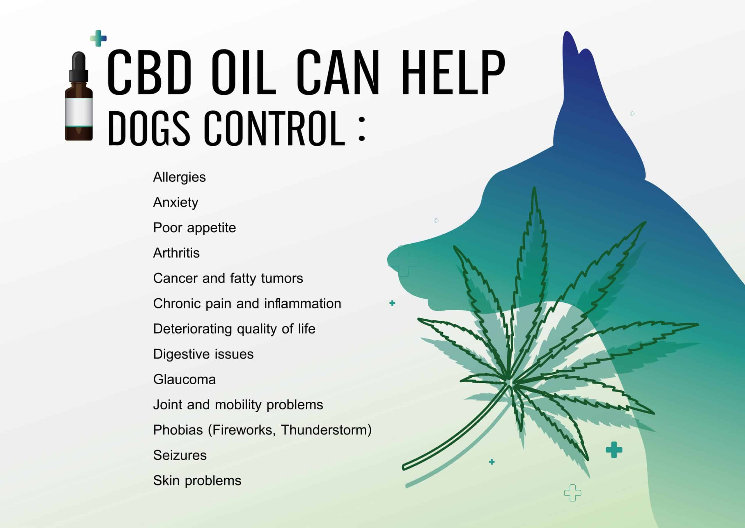 Graphic illustrates Cannabiliol benefits for dogs. CBD oil has the capabilities to improve your dog's health just like it works on humans.