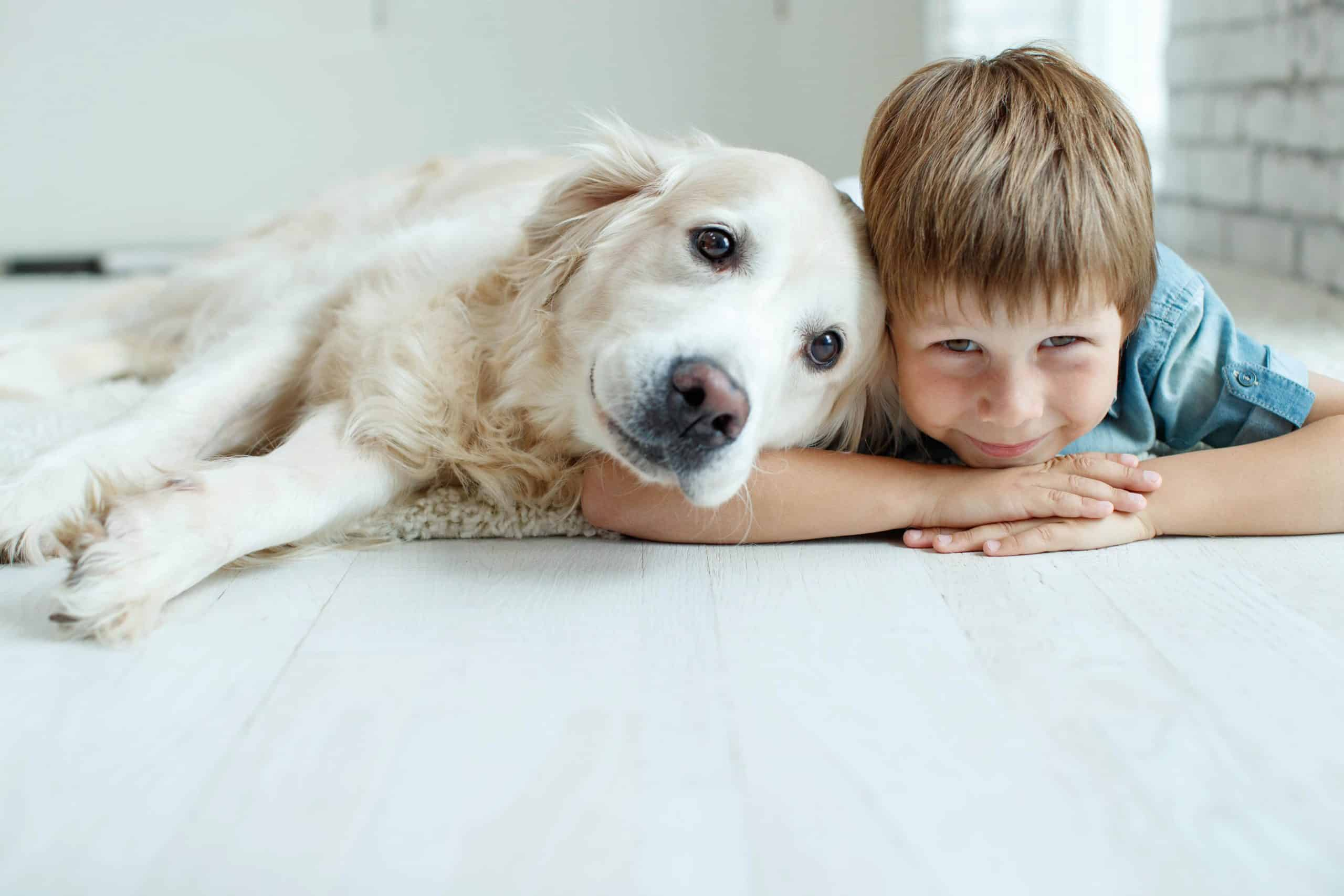 Golden retriever snuggles with his boy on the floor. Golden retrievers are happy, friendly, playful dogs that make great companions for children.