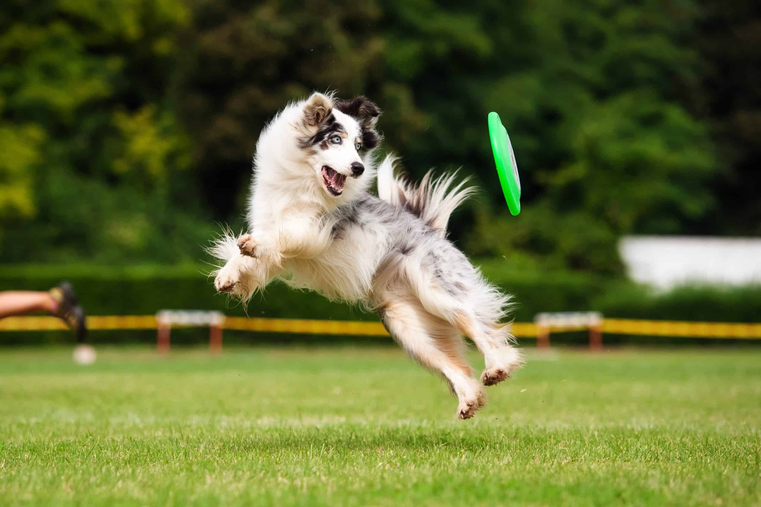 Playing frisbee with your dog is a good way to exercise.