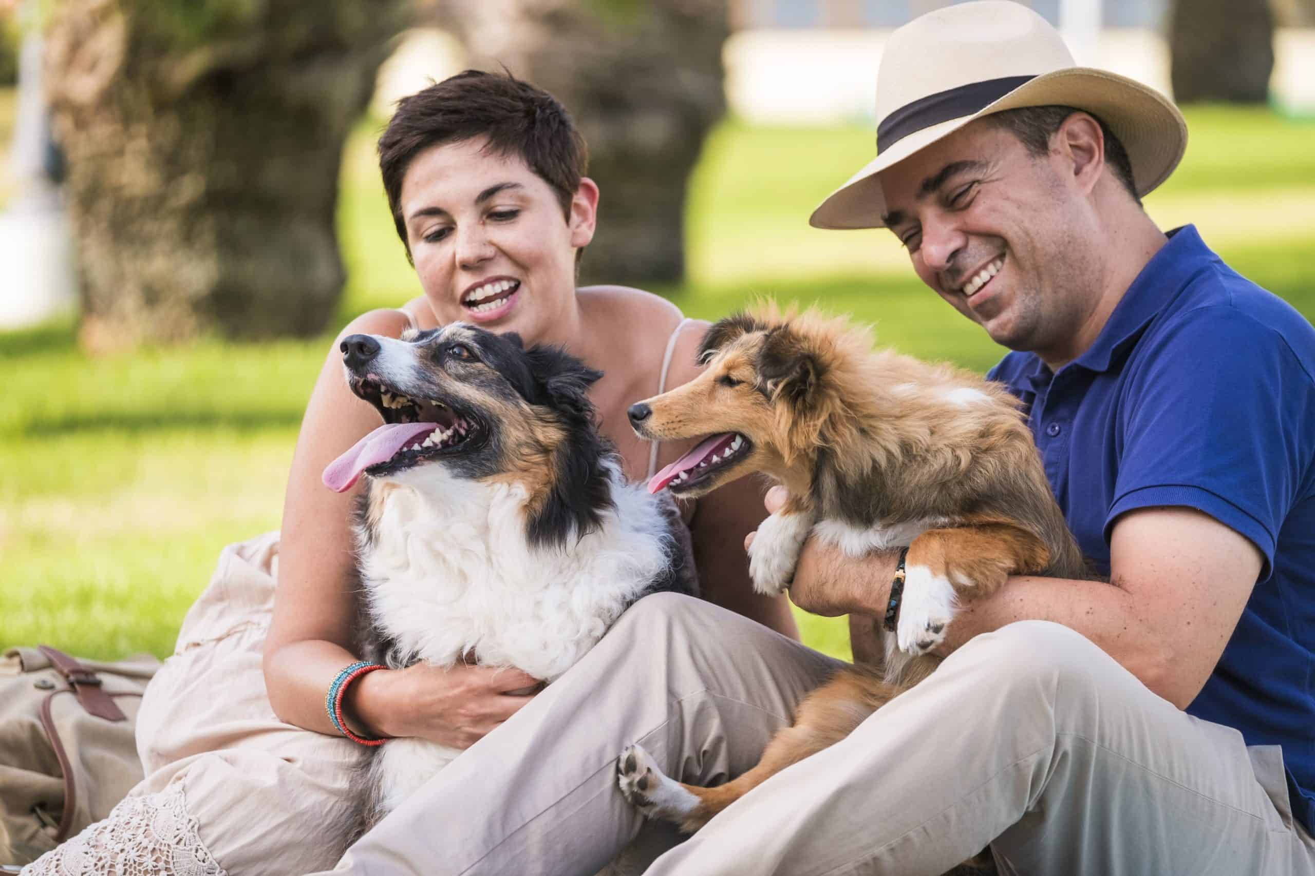 """Man and woman meet at park with Australian shepherd and Shetland sheepdog. Survey shows pet parents say their dog has a """"better social life"""" than they do. More than half say their dog has more friends."""