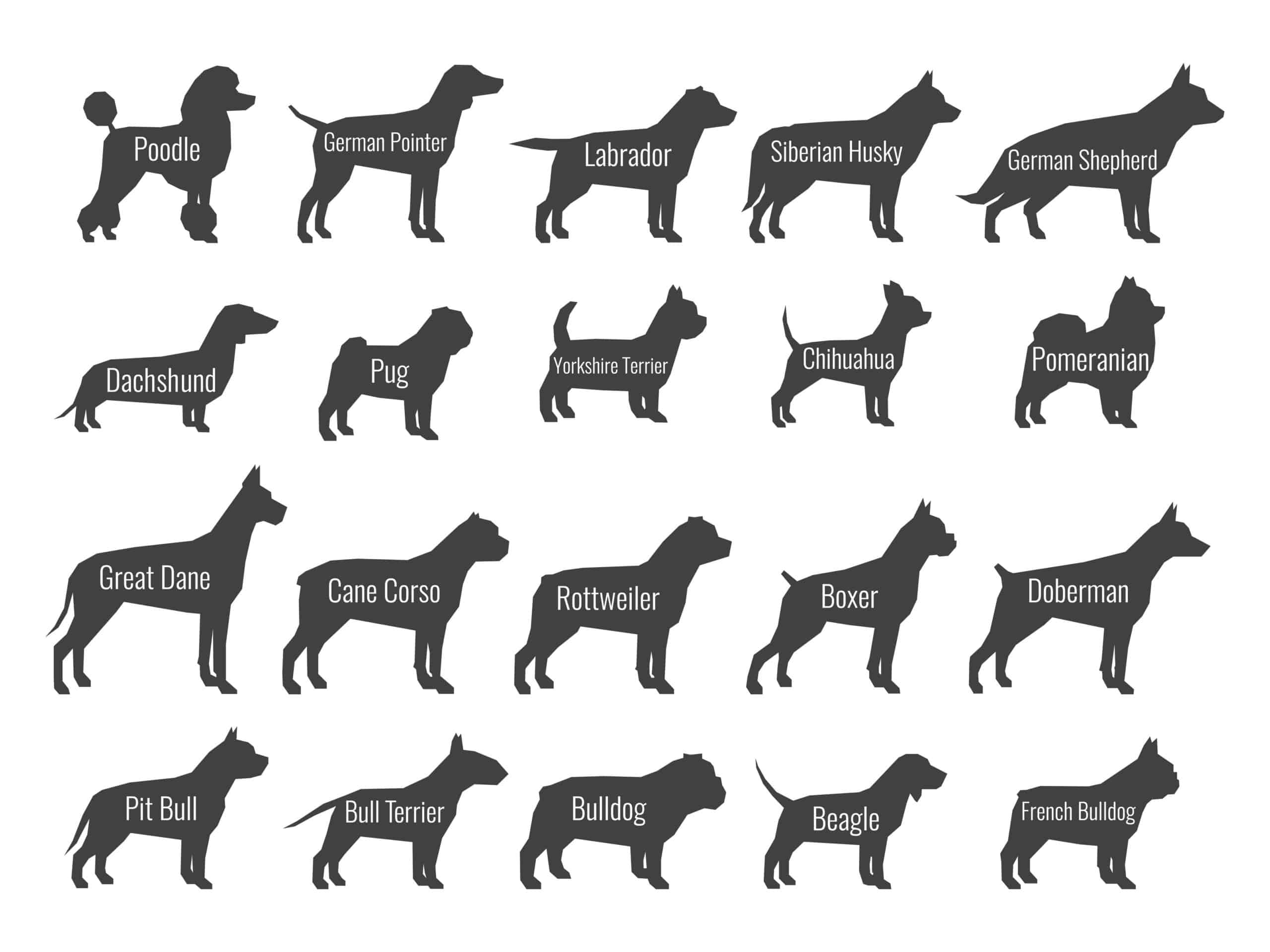 Dog tail shapes graphic