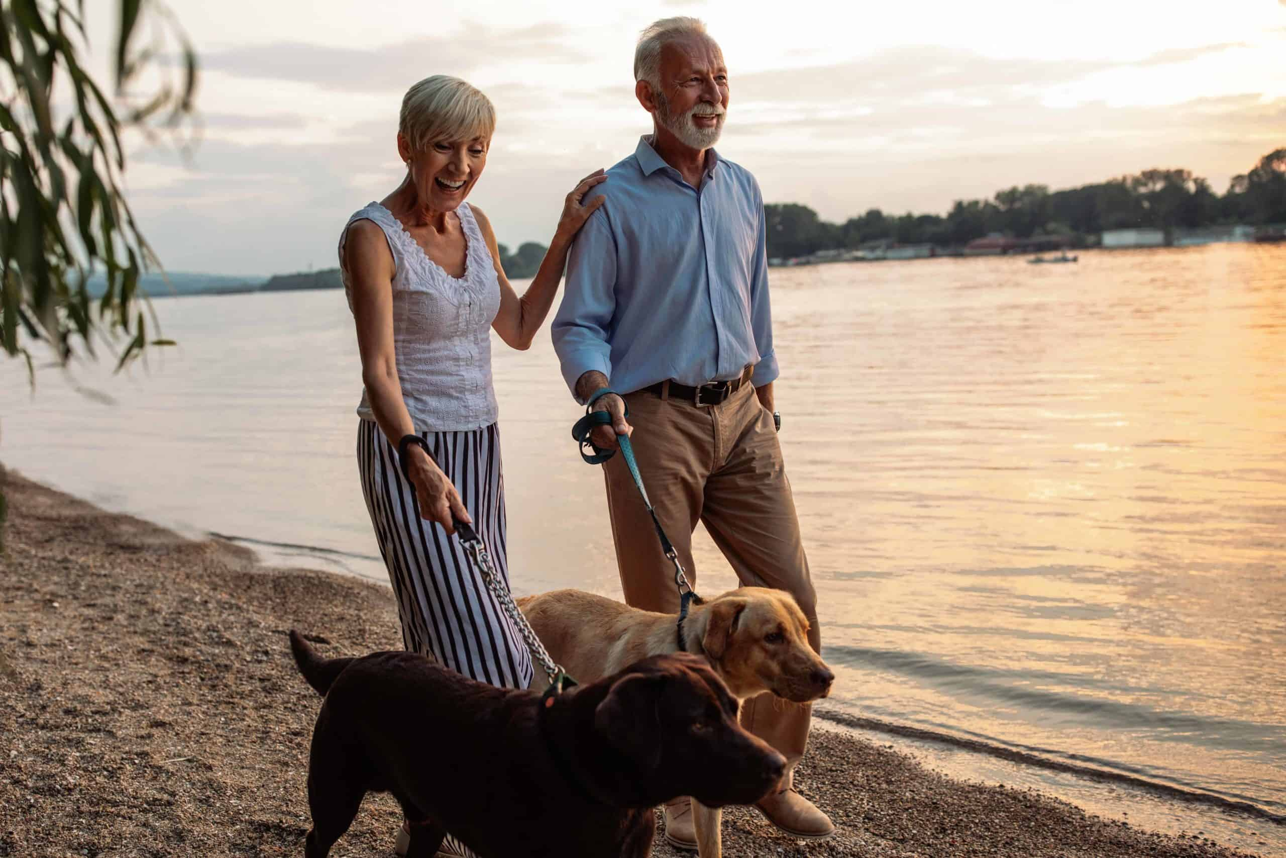 Older couple walks chocolate Labrador and yellow Labrador. Meet-cute love stories start with dogs who help their owners find their soulmates.