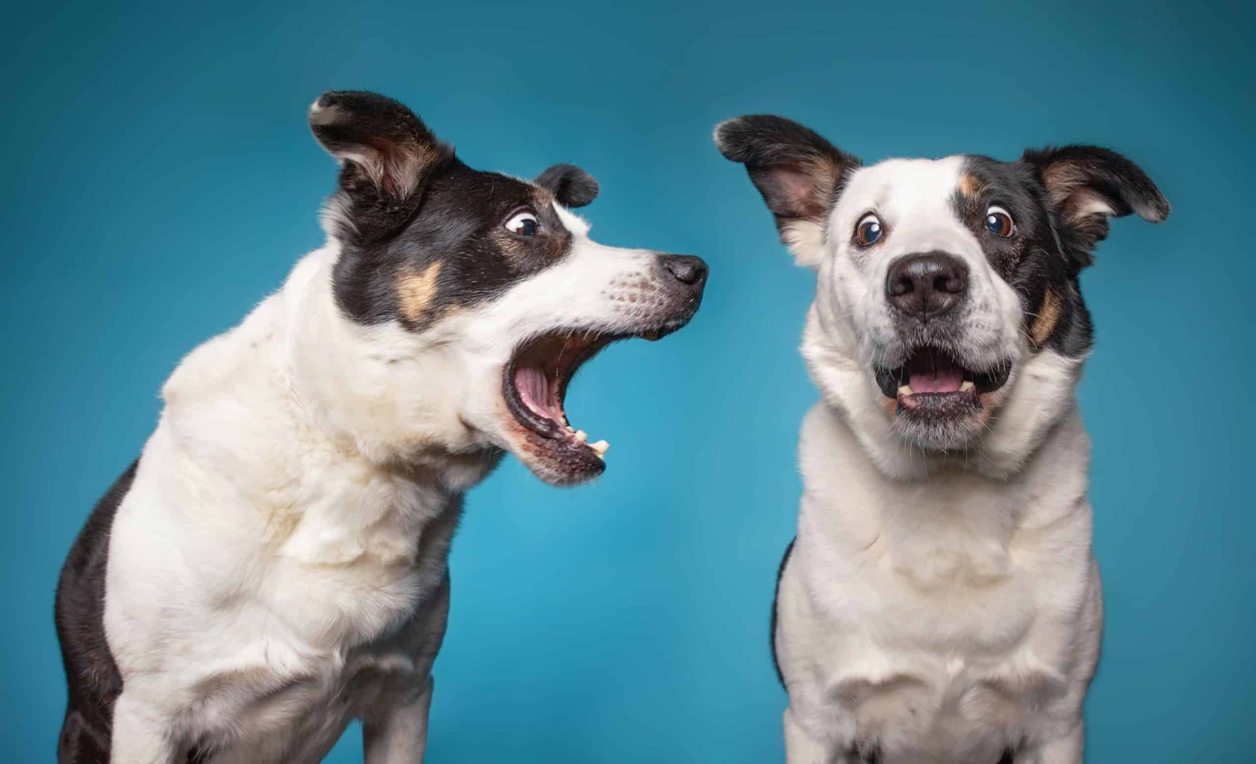 Dog barks at another dog. Determine what causes your dog's non-stop barking. Is it anxiety, dominance, or both?