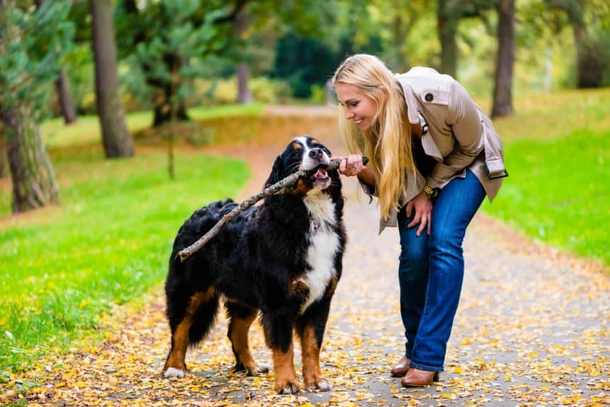 Woman walks Bernese Mountain Dog on a wooded trail. Pet parents can protect their furry friends from parasites by maintaining their yards and checking for ticks after walks.