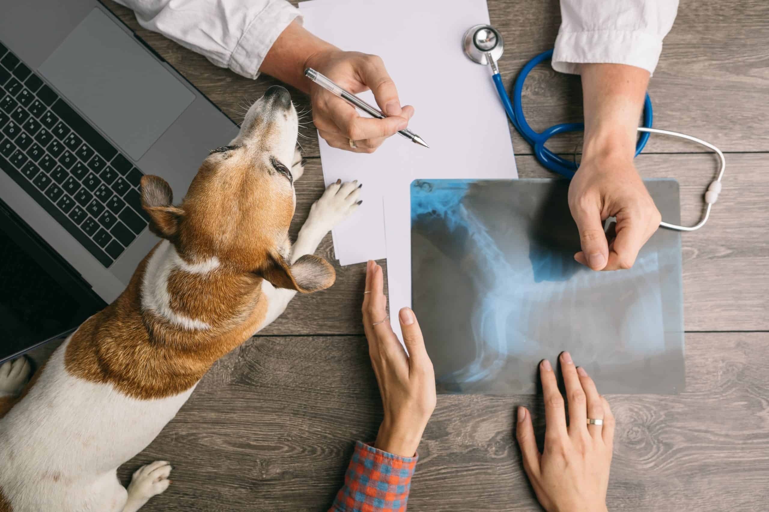 Photo illustration of vet meeting with beagle's owner to discuss x-ray. Routine vet checkup benefits include monitoring and protecting your dog's health, early detection of illness, and saving money.