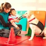 Therapist works with child and animal-assistance therapy dog.