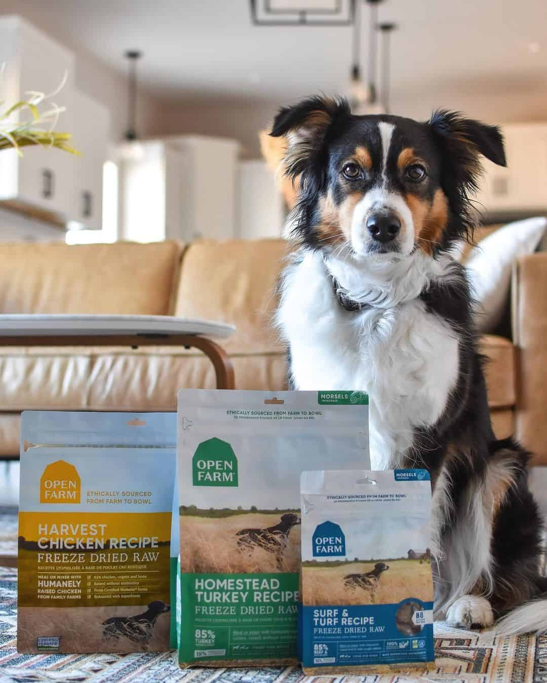 Border Collie with Open Food dog food. Once you've determined why your dog would benefit from adding a dog food topper to his bowl, you can consider the options that best suit that purpose.