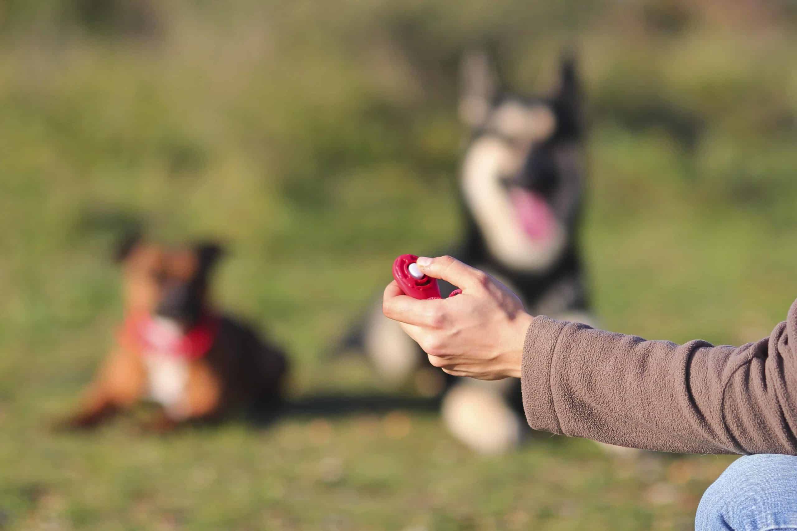 Clicker training works because the button on the device gives off an artificial sound that dogs don't typically hear.