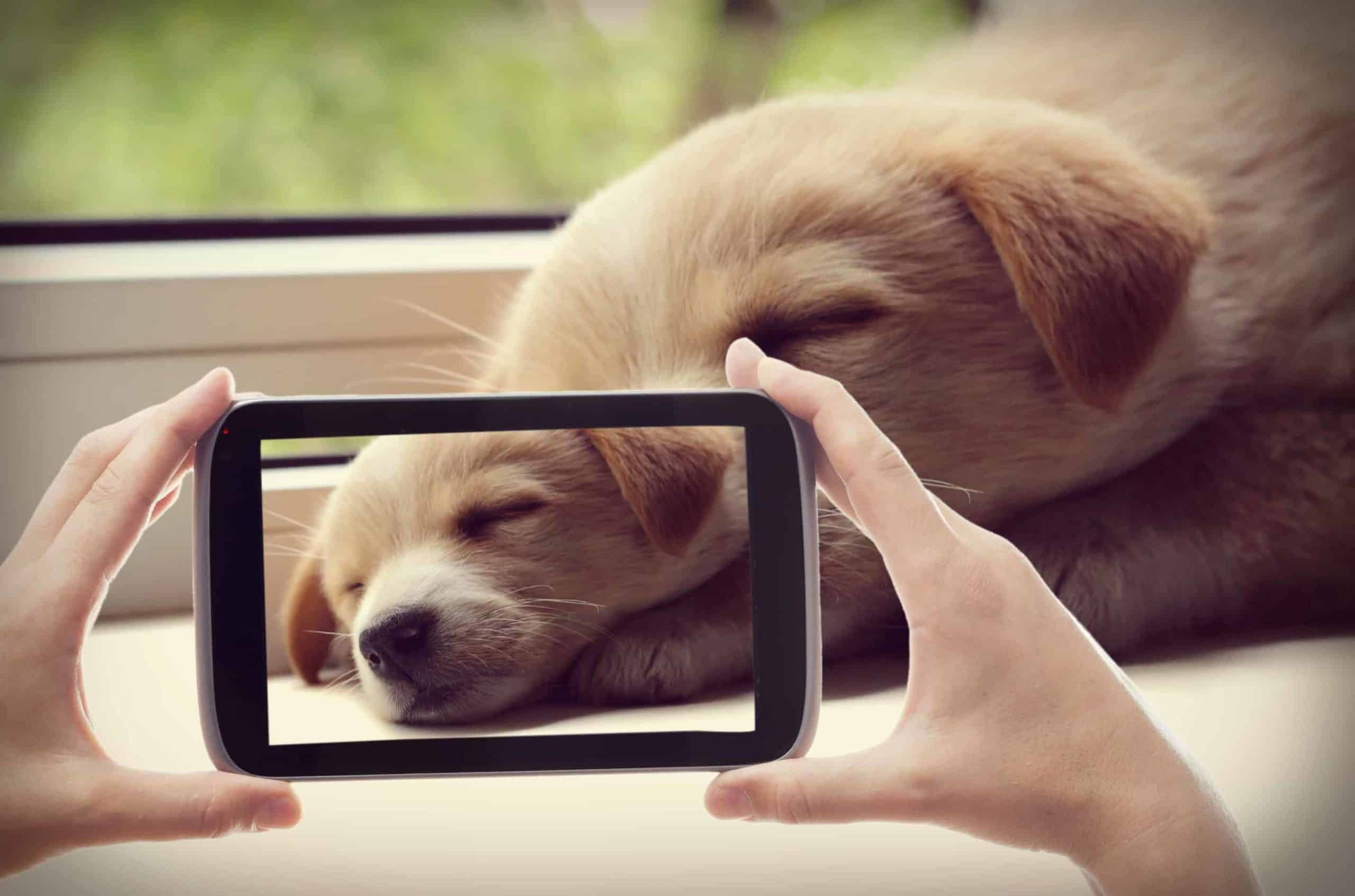 Owner takes picture of sleeping puppy. Creating a custom pet phone case lets you safeguard your favorite pet photo and immortalize it.