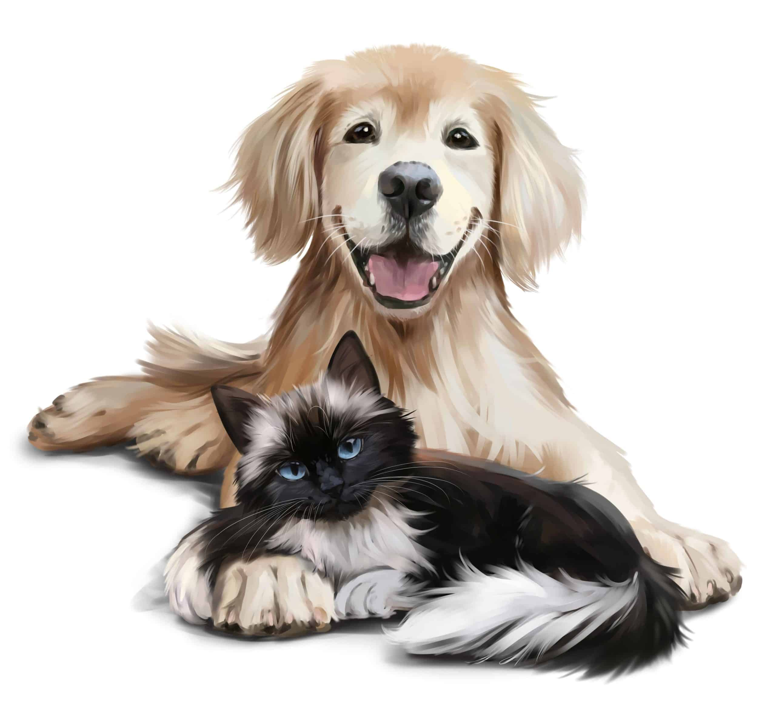 Dog and cat pet portrait. Pet portraits capture your pet's personality and provide a perfect addition to a gallery wall or mantle display of family members.