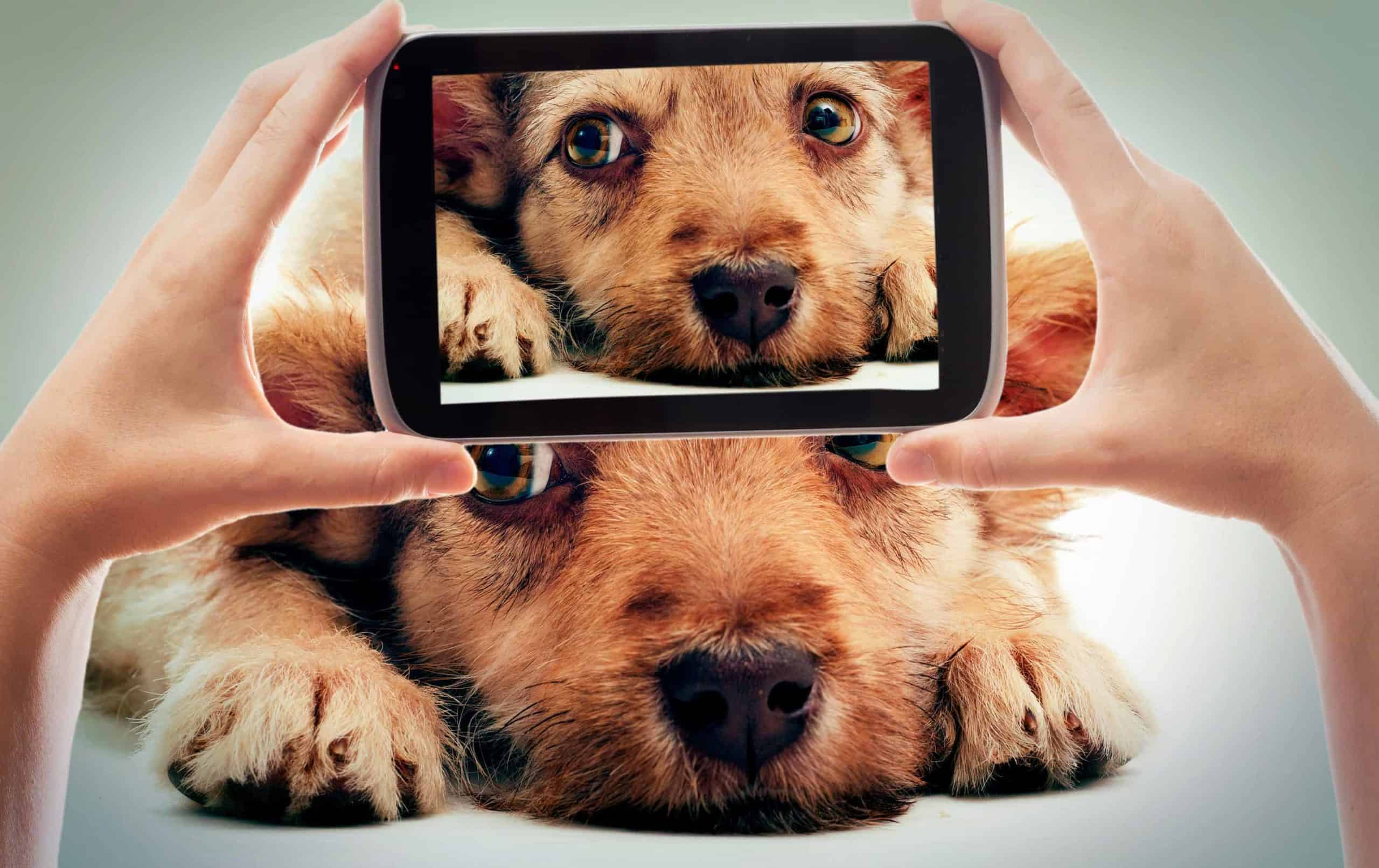 Owner takes photo of dog. Gaining popularity on social media like Instagram, Facebook using your dog's charisma is much easier because the content is genuine.