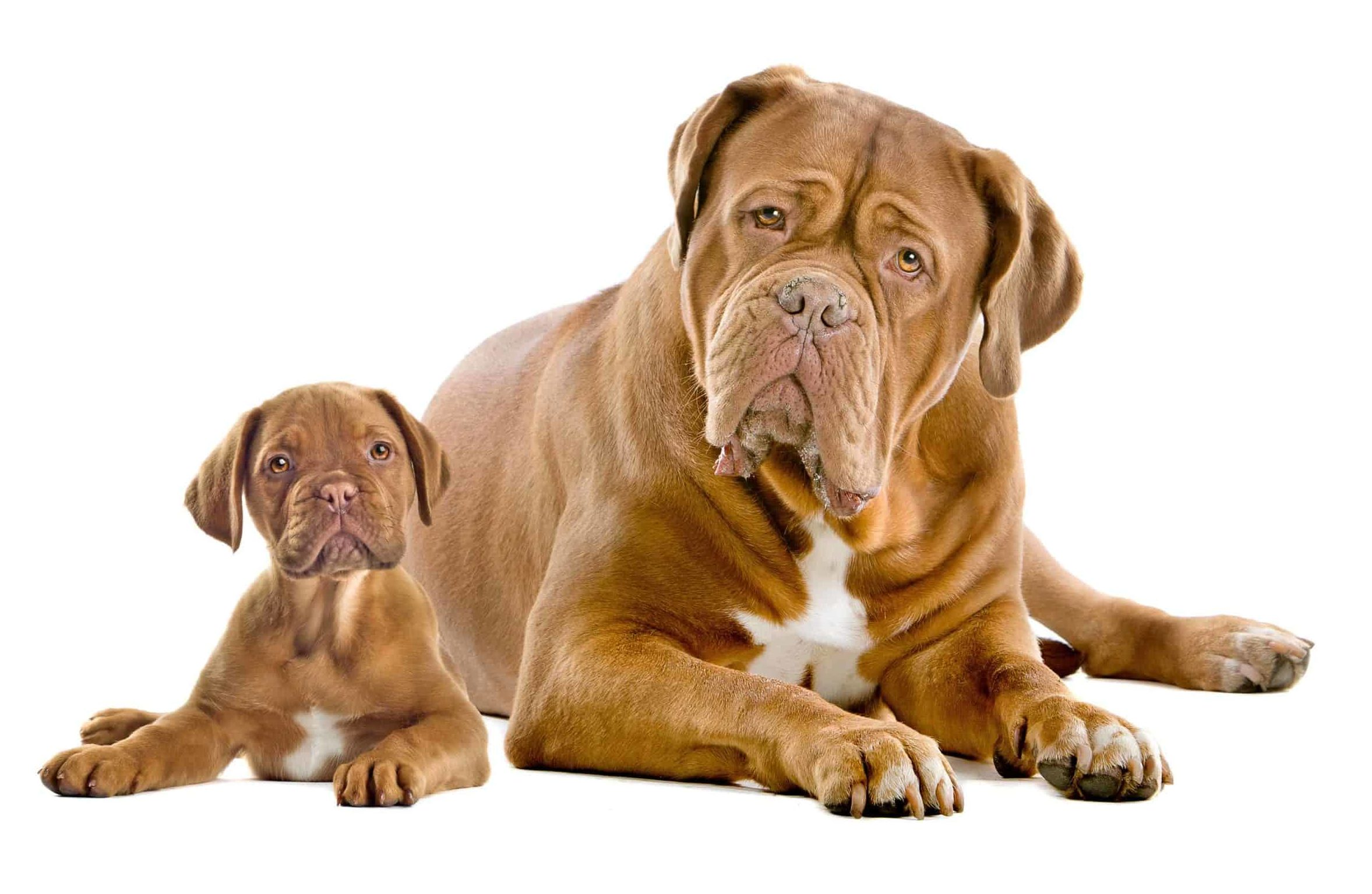 Puppy with adult dog. Older dogs usually adapt when you add new dog, but some struggle. Let the dogs work it out. Step in only if they become violent.