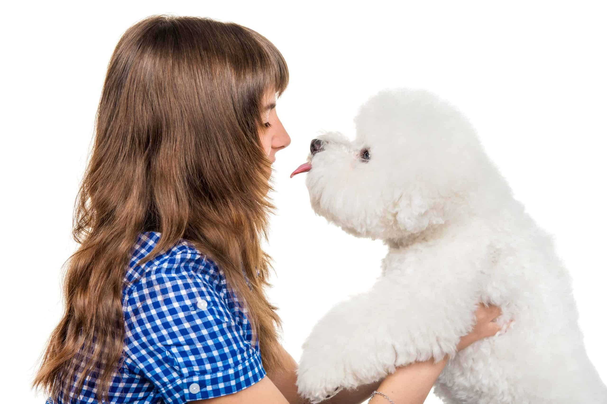 Young girl holds bichon frise. To choose the right dog breeds for children, consider the family's lifestyle, the dog's size, temperament, and energy level.