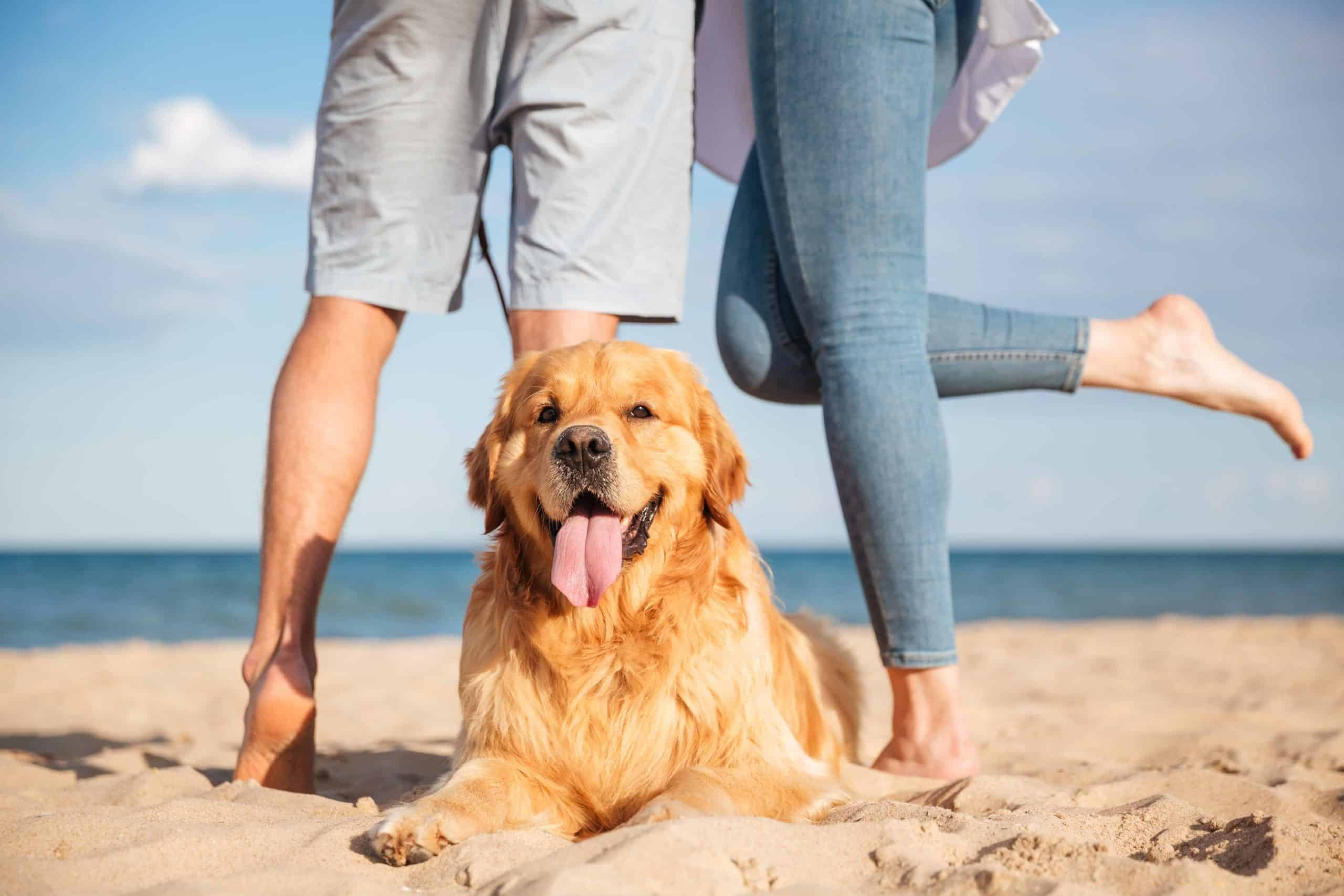 Happy couple poses with golden retriever at the beach. Start planning the perfect dog-friendly date. Consider biking, a trip to the dog park, a baseball game, or watching a sunset.
