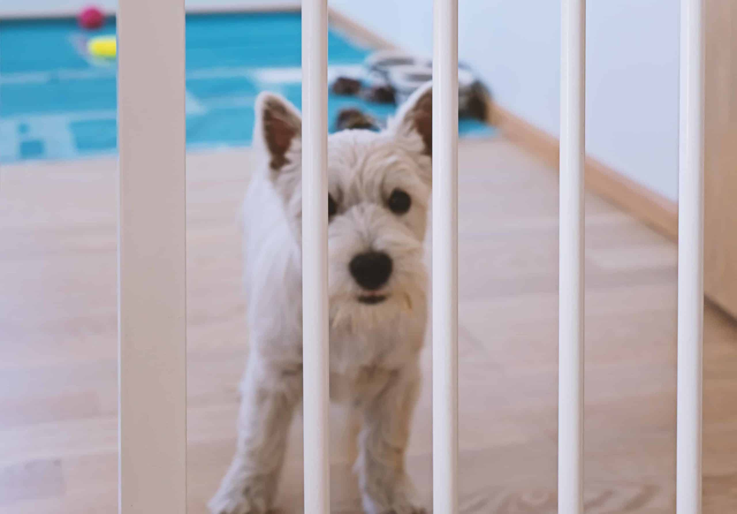 Puppy stands behind a puppy gate. Use a puppy gate to create a small containment area for your dog. If your puppy has too much room, it will be able to go to the bathroom without soiling its bed or blankets.