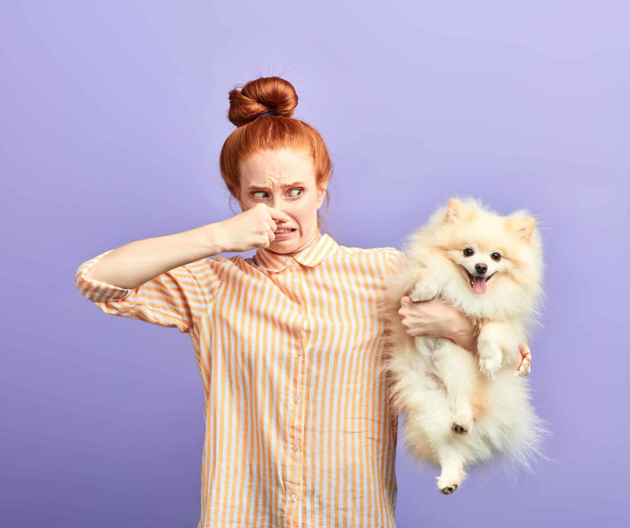 Woman holds smelly Pomeranian. Dogs that smell bad may need to see the vet. Bad odors can be caused by food allergies, dental problems, or other health conditions.